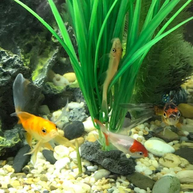 Four fishy friends Big John Blot Flourish Flash simplicity joyhellip
